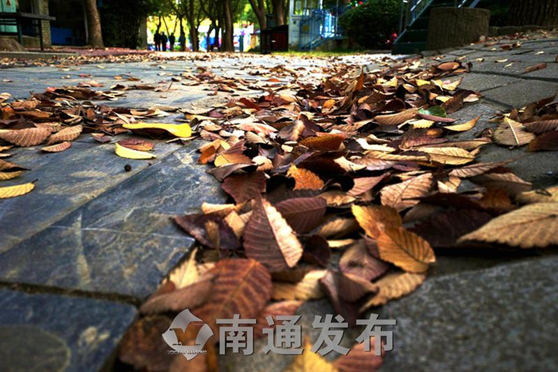 落叶缤纷好个秋