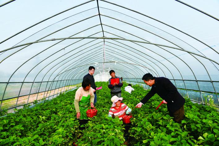 在草莓种植基地宣传脱贫政策